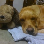 April and her stuffed dog.